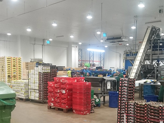 Food Packing Plant LED Lighting Case Study - Zone 3 - After
