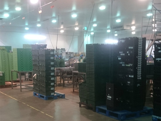 Food Packing Plant LED Lighting Case Study - Zone 3 - Before
